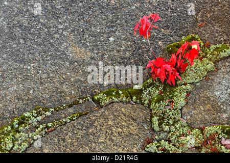 Vivaio Acero Rosso : Acero rosso vivaio e agriturismo postimet facebook