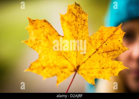 Close up gialla foglie di autunno Foto Stock
