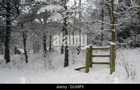 Un bellissimo paese delle meraviglie invernali su un boschi innevati inverni gennaio giorno Foto Stock