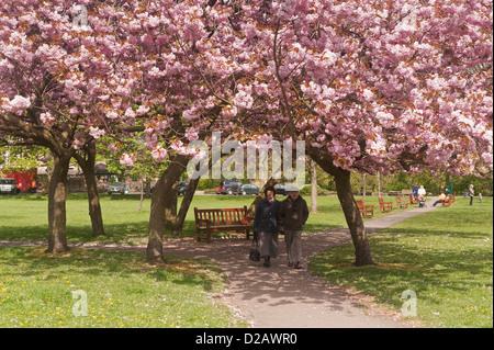 La gente a piedi sul soleggiato il sentiero del parco sotto la tettoia di alberi e belli e colorati di rosa fiori Foto Stock