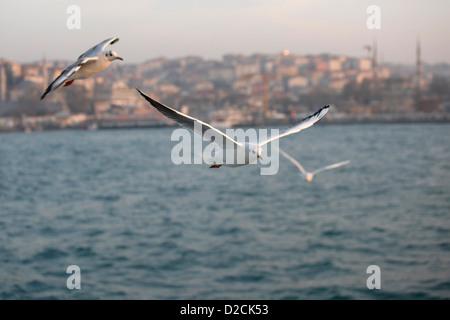 Vista di tre gabbiani seagull battenti su lo stretto del Bosforo mar di Marmara con panorama del litorale Istanbul Foto Stock