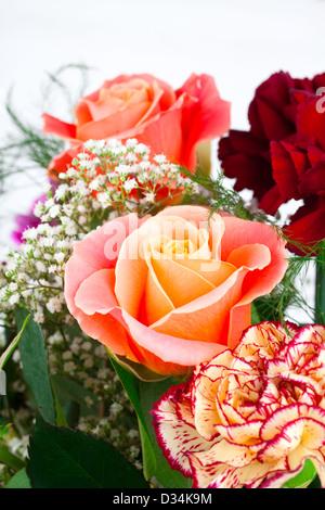 fiore di rosa Foto Stock