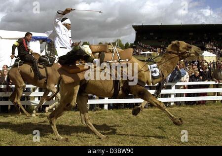 (Dpa) - Fantini sui cammelli e dromedari power i loro animali durante la prima corsa di cammelli di Bad Harzburg, Foto Stock