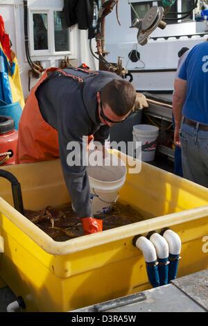 I pescatori di granchio vendendo granchi freschi dalle loro barche sul dock a Pilastro punto Half Moon Bay California Foto Stock