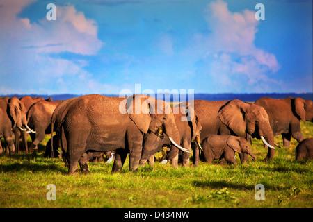 - Gli elefanti elefante africano mandria sulla savana africana, Safari in Amboseli National Park in Kenya, Africa Foto Stock