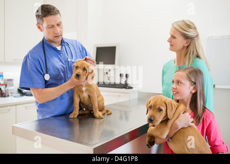 Veterinario esaminando un cane in vet chirurgia dell Foto Stock