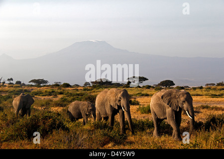 Africa, Kenya, Amboseli. Gli elefanti e Mt. Di Kilimanjaro. Foto Stock
