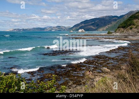 Goose Bay nei pressi di Kaikoura, Canterbury, Nuova Zelanda Foto Stock
