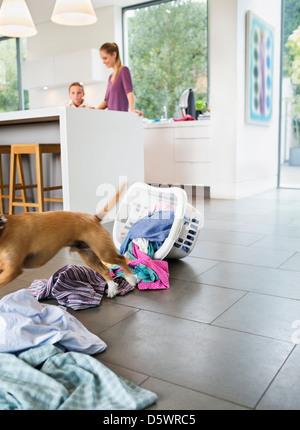 Cane rendendo pasticcio in cucina Foto Stock