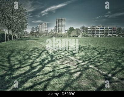 Alberi gettando ombre sull'erba in posizione di parcheggio Foto Stock