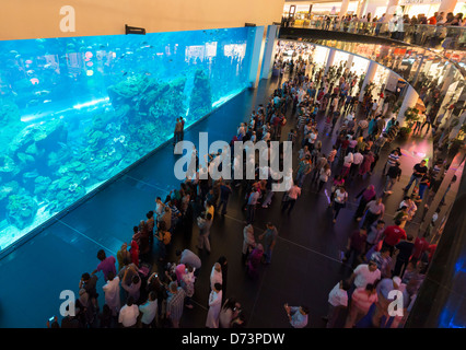 Grande Acquario del centro commerciale di Dubai negli Emirati Arabi Uniti EMIRATI ARABI UNITI Foto Stock