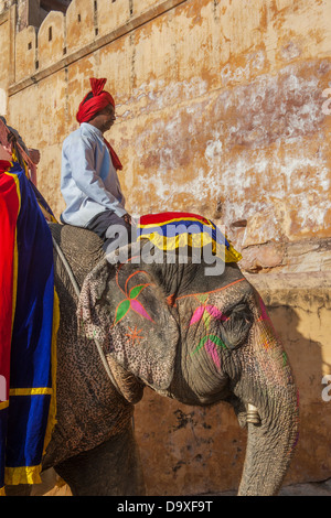 Decorate elefante al Forte Amber su Dicembre, Gennaio 27, 2013 a Jaipur, Rajasthan, India. Foto Stock