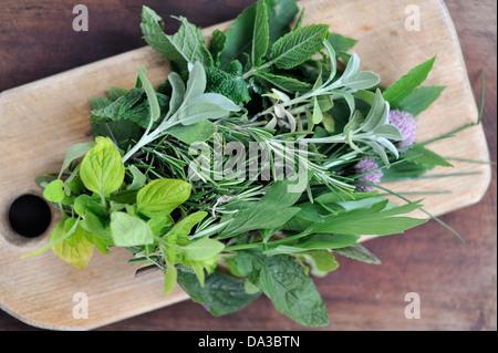 Tagliere con di fresco con erbe raccolte dal di sopra Foto Stock