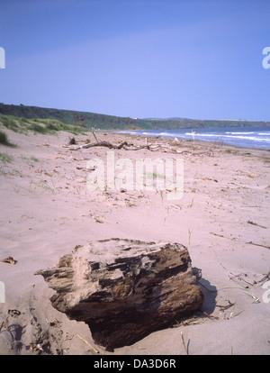 San Ciro la spiaggia e la baia di San Ciro Riserva Naturale Nazionale, Aberdeenshire, Scotland, Regno Unito Foto Stock