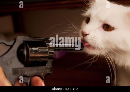 Gatto coraggioso Foto Stock
