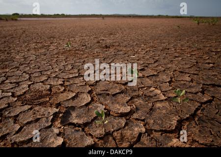 Il paesaggio del deserto in Sarigua National Park, Herrera provincia, Repubblica di Panama. Foto Stock