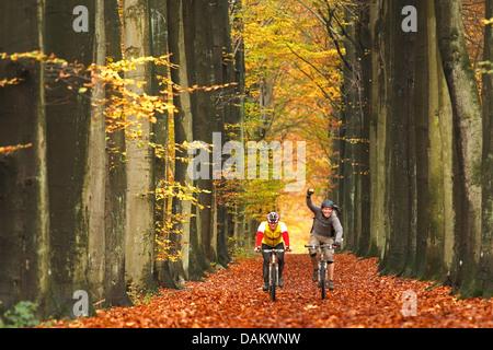 Due Mountain Bike mountain bike attraverso il fogliame di autunno di un vicolo, Belgio Foto Stock