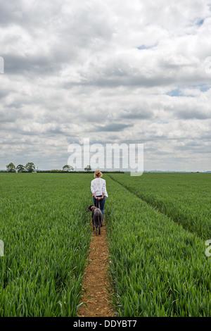 La donna a piedi un cane attraverso un campo di grano. Foto Stock