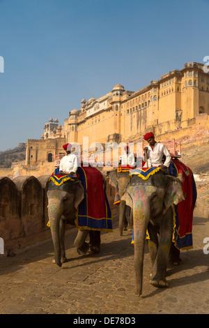 India Rajasthan, Jaipur, gli elefanti al forte amber Foto Stock