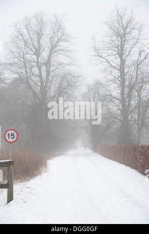 Misty foggy snowy lane con alberi di nudo Foto Stock