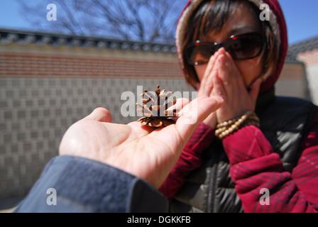 Mano trattiene il cono di pino che mostra per le donne Foto Stock