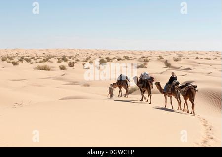 Il turismo sostenibile, trekking con il cammello, cammelli, dromedari (Camelus dromedarius), dune di sabbia del Foto Stock