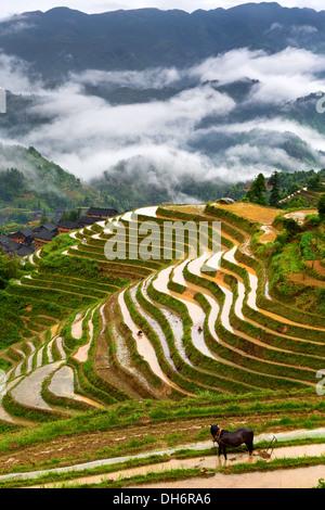 Vista di Longji terrazze di riso nella provincia di Guangxi, Cina Foto Stock