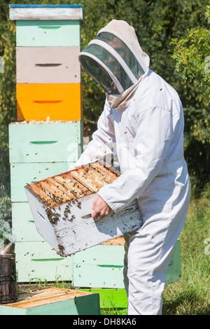 Apicoltore maschio portante cassa a nido d'ape Foto Stock