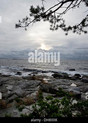 Sunrise costiera al litorale nordico con alcuni alberi di pino nella parte anteriore Foto Stock