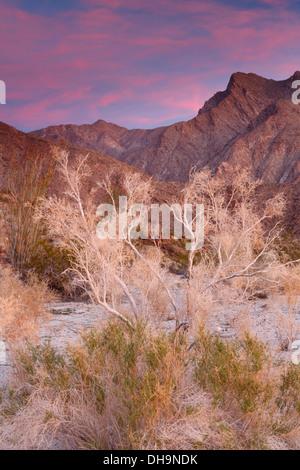 Anza-Borrego Desert State Park, California. Foto Stock