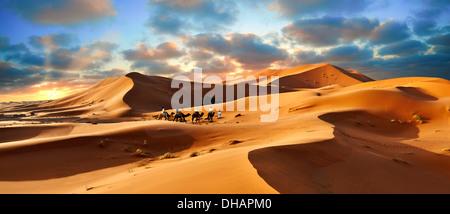 Giri in cammello sul Sahara dune di sabbia di Erg Chebbi al tramonto, Marocco, Africa Foto Stock