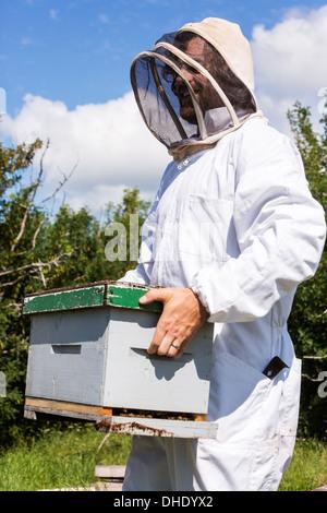 Apicoltore portando scatola di nido d'ape Foto Stock