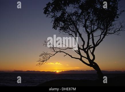Manzanita tramonto sul punto Atkinson, Lighthouse Park, Vancouver, British Columbia, Canada Foto Stock