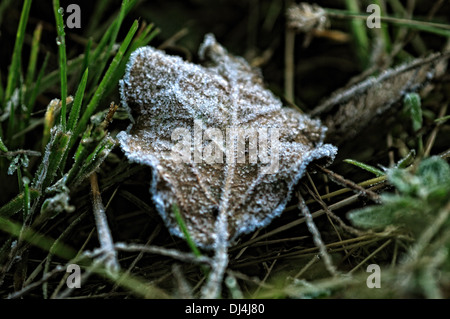 Frosty foglia sul terreno Foto Stock