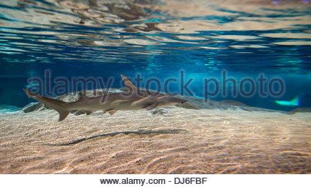 Diverse immagini o foto del sottomarino o sottomarino paradiso naturale Foto Stock