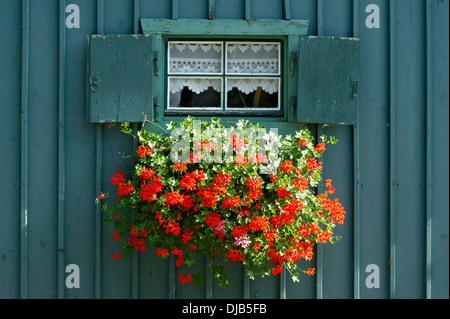 Fioriere Per Persiane ~ Finestra con persiane aperte e cassetta per fiori di gerani