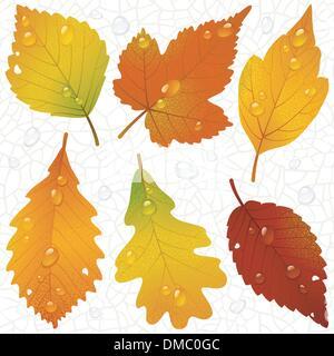 Vettore di foglie di autunno e senza soluzione di continuità sullo sfondo della vena Foto Stock