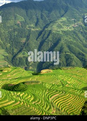 Il Longsheng terrazze di riso (Lóngshèng Tītián) o Dragon's Backbone terrazze di riso, situato nella contea di Longsheng, Foto Stock