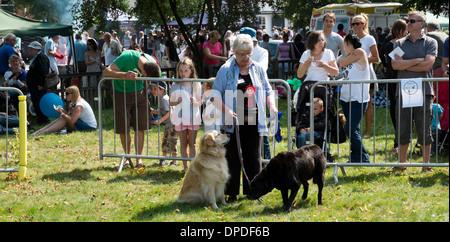 La donna che mostra i suoi due cani di dog show Beaconsfield paese annuale fayre (fair) Buckinghamshire REGNO UNITO Foto Stock