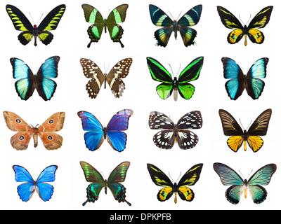 Farfalle tropicali Foto Stock