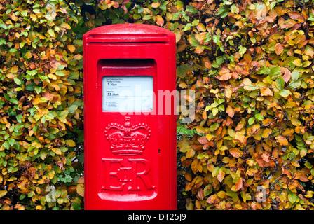Rosso brillante Post Box circondato da foglie autunnali, Cheshire, Inghilterra Foto Stock