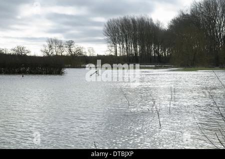 Campo allagato i campi con terreni coltivati e recinzioni e alberi di subacquea saturo di acqua radici Foto Stock