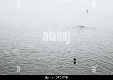 Nuotatori nel fiume Gange a Varanasi Benares in Uttar Pradesh in India in Asia del Sud. Nuotare Nuoto persone semplicità Foto Stock