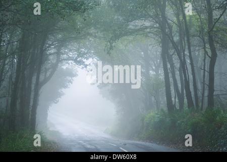 Strada attraverso la nebbia avvolta bosco di latifoglie, Nr Lamorna, Cornwall, Inghilterra. In autunno (settembre) Foto Stock