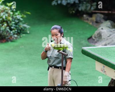Spettacolo Bird a Singapore Zoo. Foto Stock