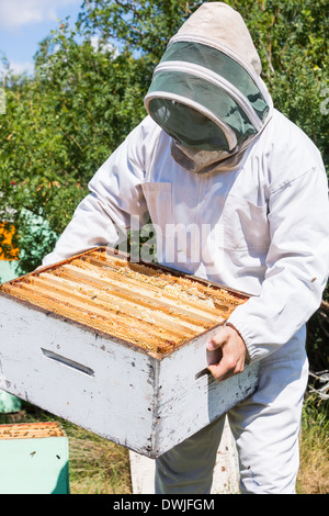 Apicoltore portante cassa a nido d'ape a Apiario Foto Stock
