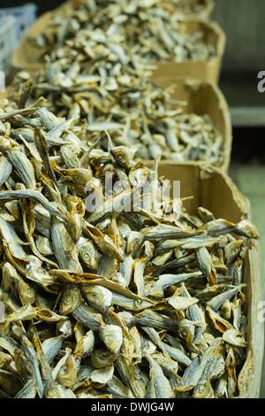 Acciughe essiccate in un Kuala Lumpar market Foto Stock
