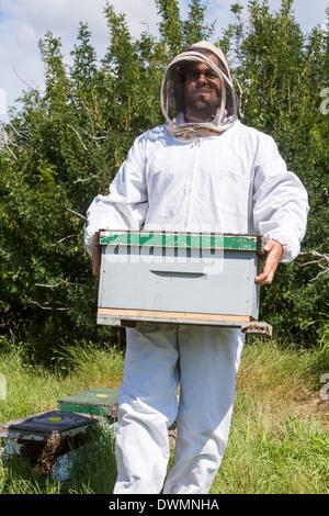 Apicoltore maschio portando scatola di nido d'ape Foto Stock