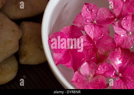 Rosa fiori di ortensie flottante in una ciotola con oli essenziali. Profondità di campo. Paesaggio. Spa scena, relax. Foto Stock