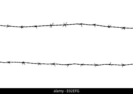 Stagliano filo spinato su sfondo bianco Foto Stock